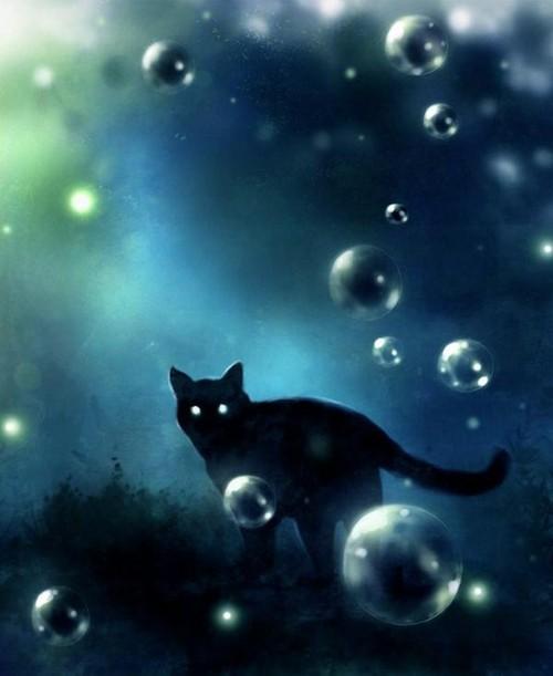 кот во сне